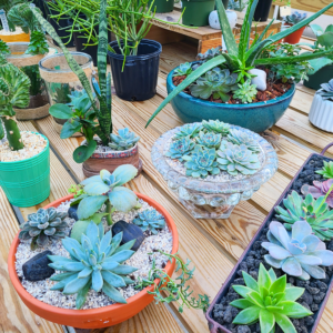 Houseplant Gardens